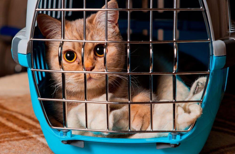 seguros de animales domésticos en casa