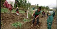 Seguros Agrícolas en México