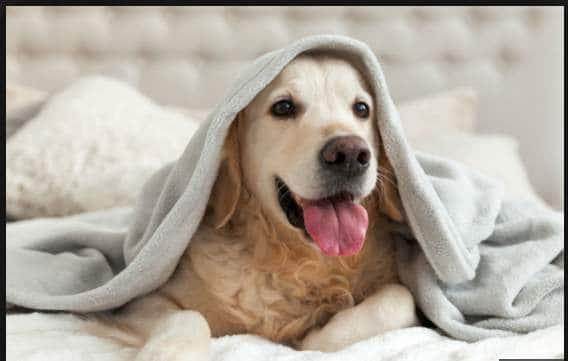 tipos de seguro para mascotas